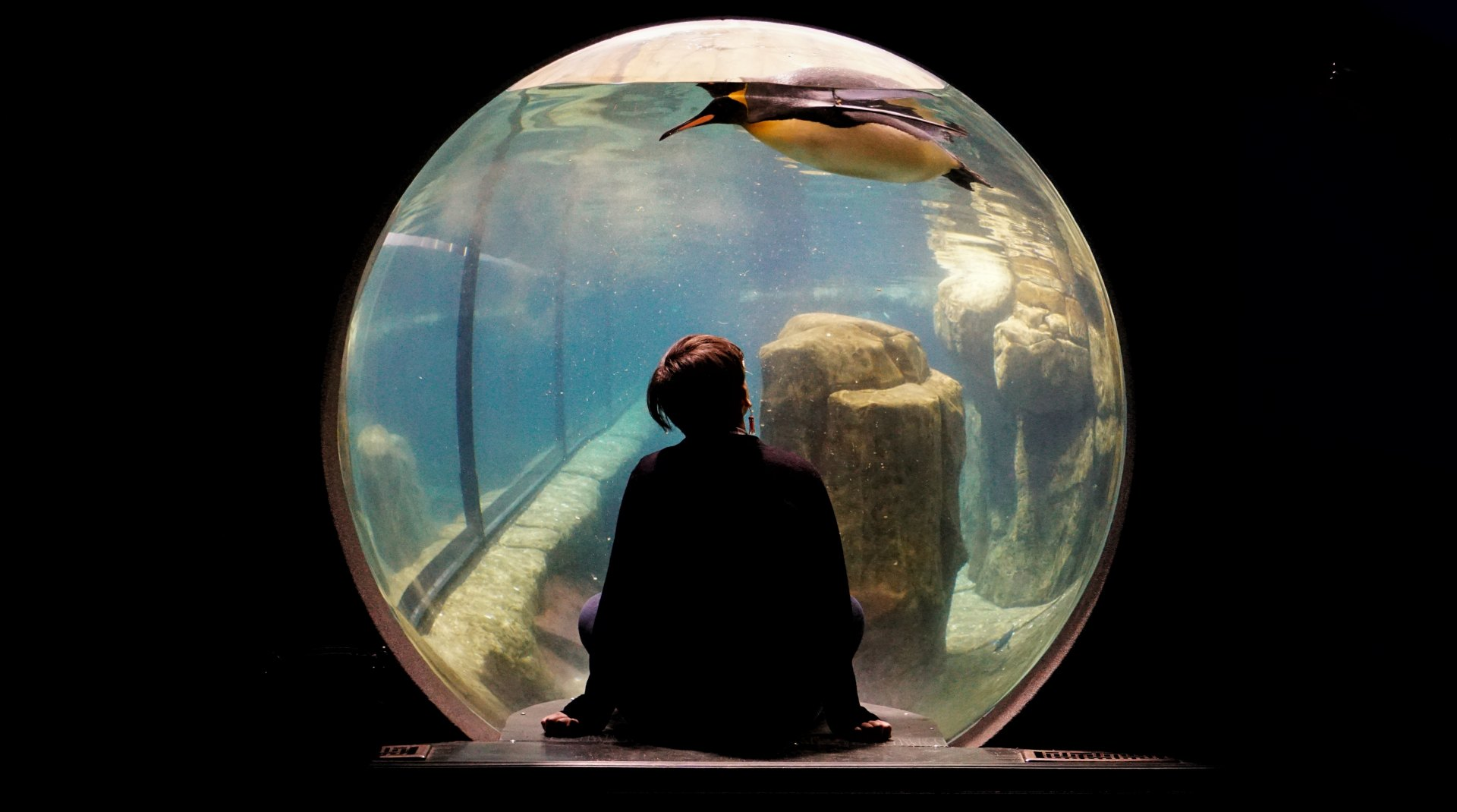Aquarium Observation