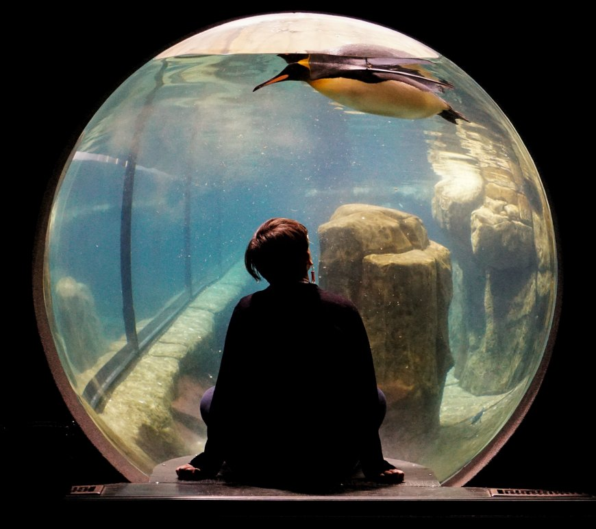 Aquarium Observation